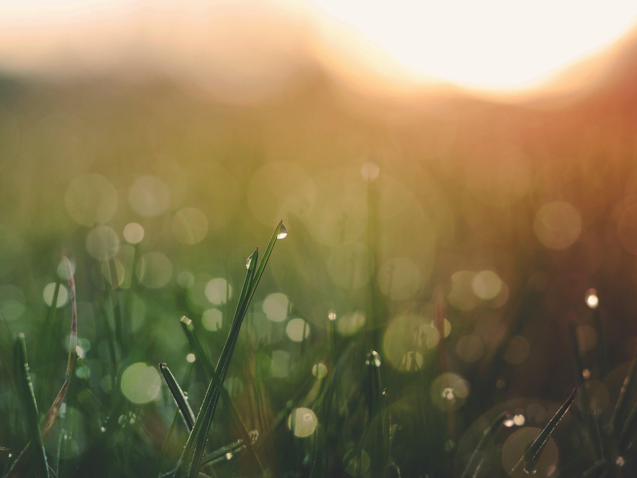 grass-bokeh.jpg