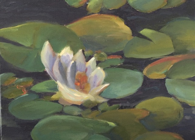 Waterlilly, Charles River