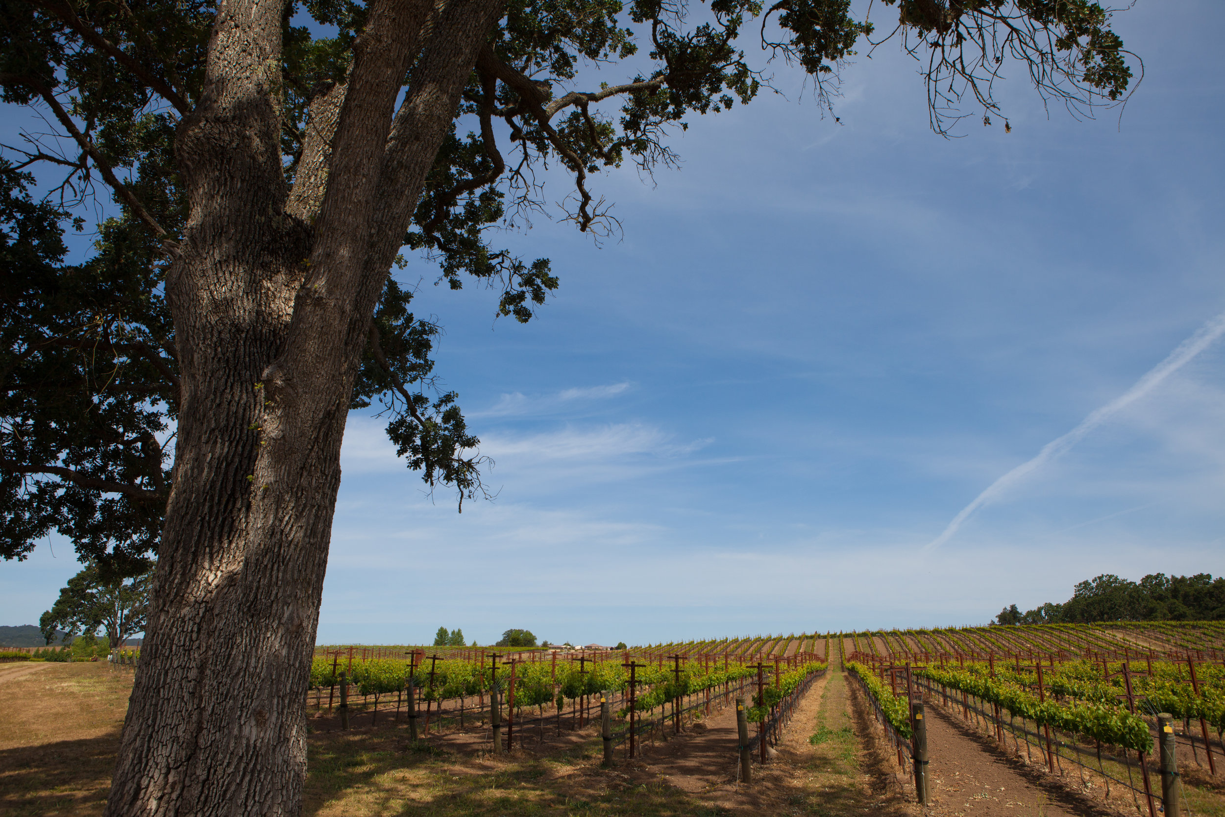 Vineyard HR-3828.jpg