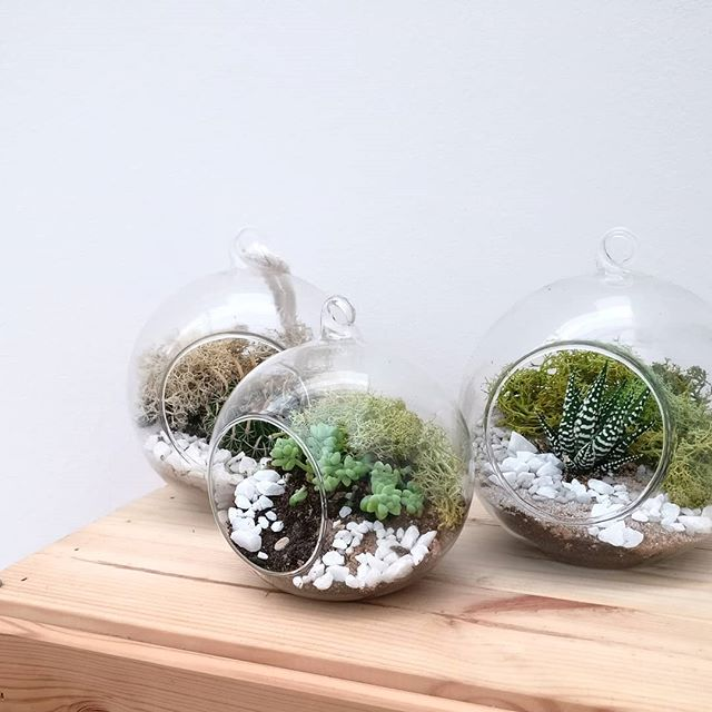 It's finally Friday and we've all survived the first glimpse of winter cold. To celebrate, treat yourself to a handmade terrarium or a DIY kit to make it yourself. Perfect for enjoying indoors with a lovely mug of hot chocolate ☕. What's even better is the start of the Black Friday Sale! Save 20% across our whole store until Monday. Your wallet will thank you for buying it now before later. 🤩