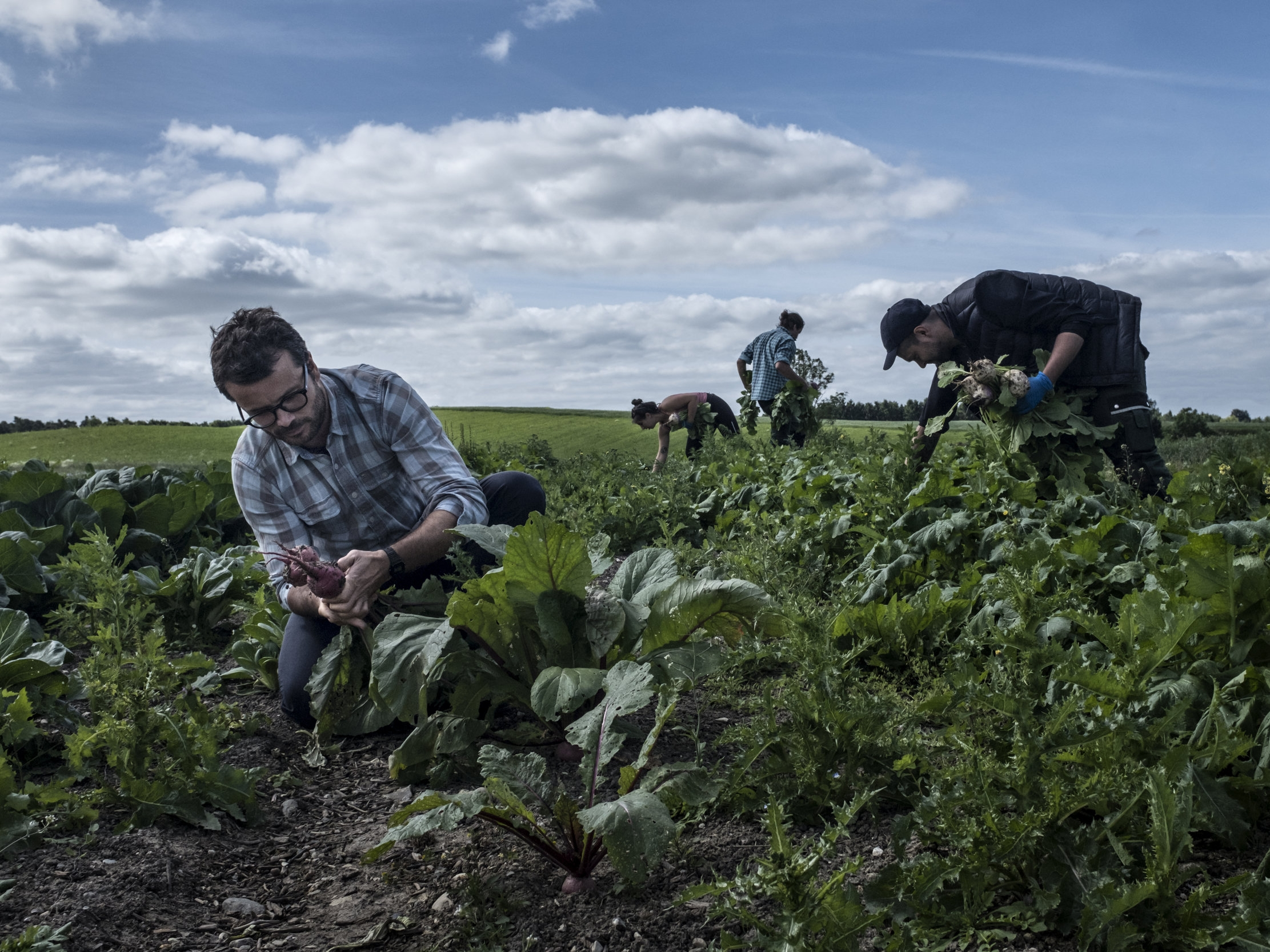 Farm of Ideas vegetables.jpg