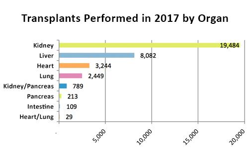 Intestine transplant is the least common single-organ transplant. Graphic from https://www.organdonor.gov/statistics-stories/statistics.html.