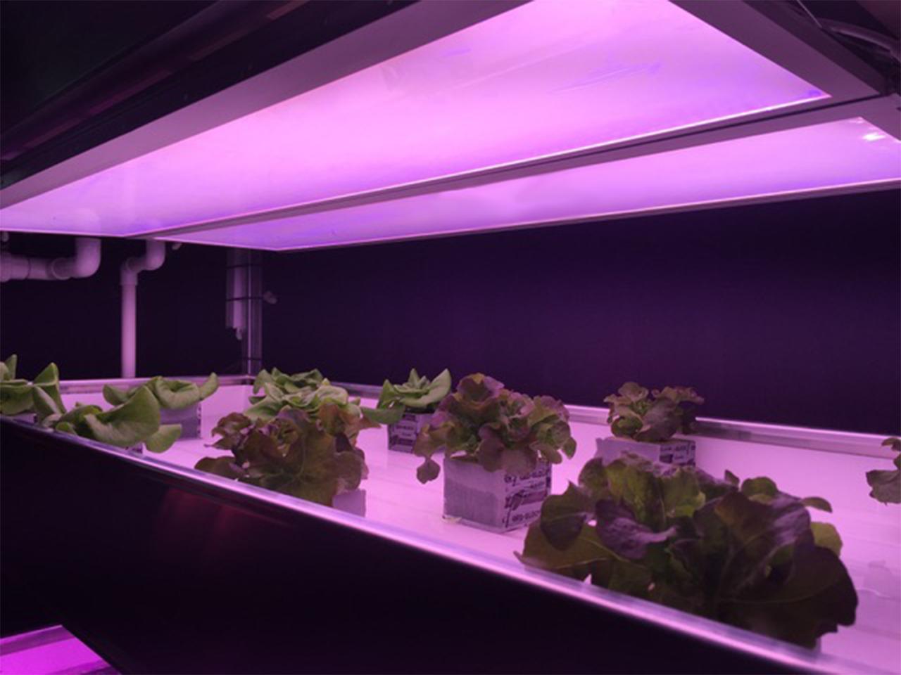 GrowBlade Edge 1400 panels at Isabel (alpha-test samples)