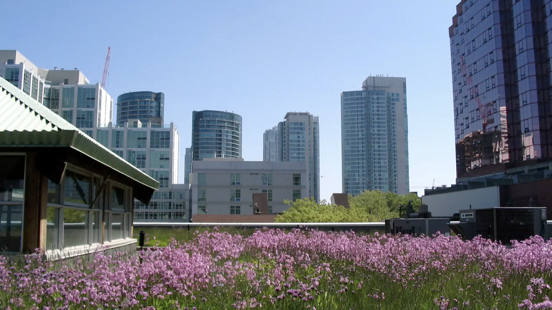 A green roof in Ontario helps manage water run off. Picture: Wikimedia