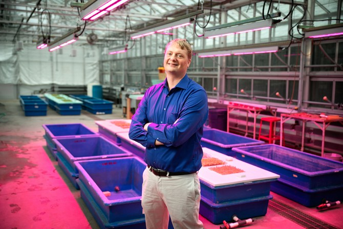Neil Mattson, associate professor in the Horticulture Section of the School of Integrative Plant Science. (Photo:Chris Kitchen/University Photography)