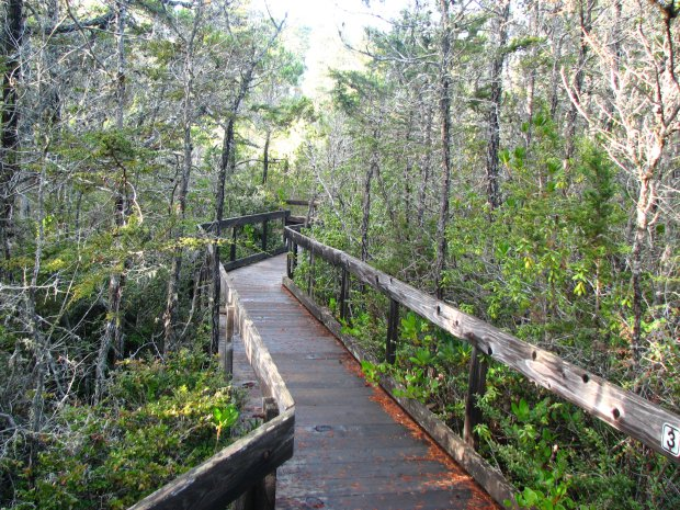 The boardwalk path cuts through the Pygmy forest in Van Damme State Park. (David Berry/Flickr)