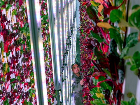 VERTICAL FARMING FUNDING ON THE RISE IN 2017 & PREDICTIONS