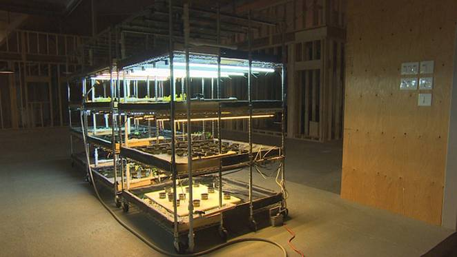 myera-group-greenhouse-2a.jpg.662x0_q70_crop-scale.jpg