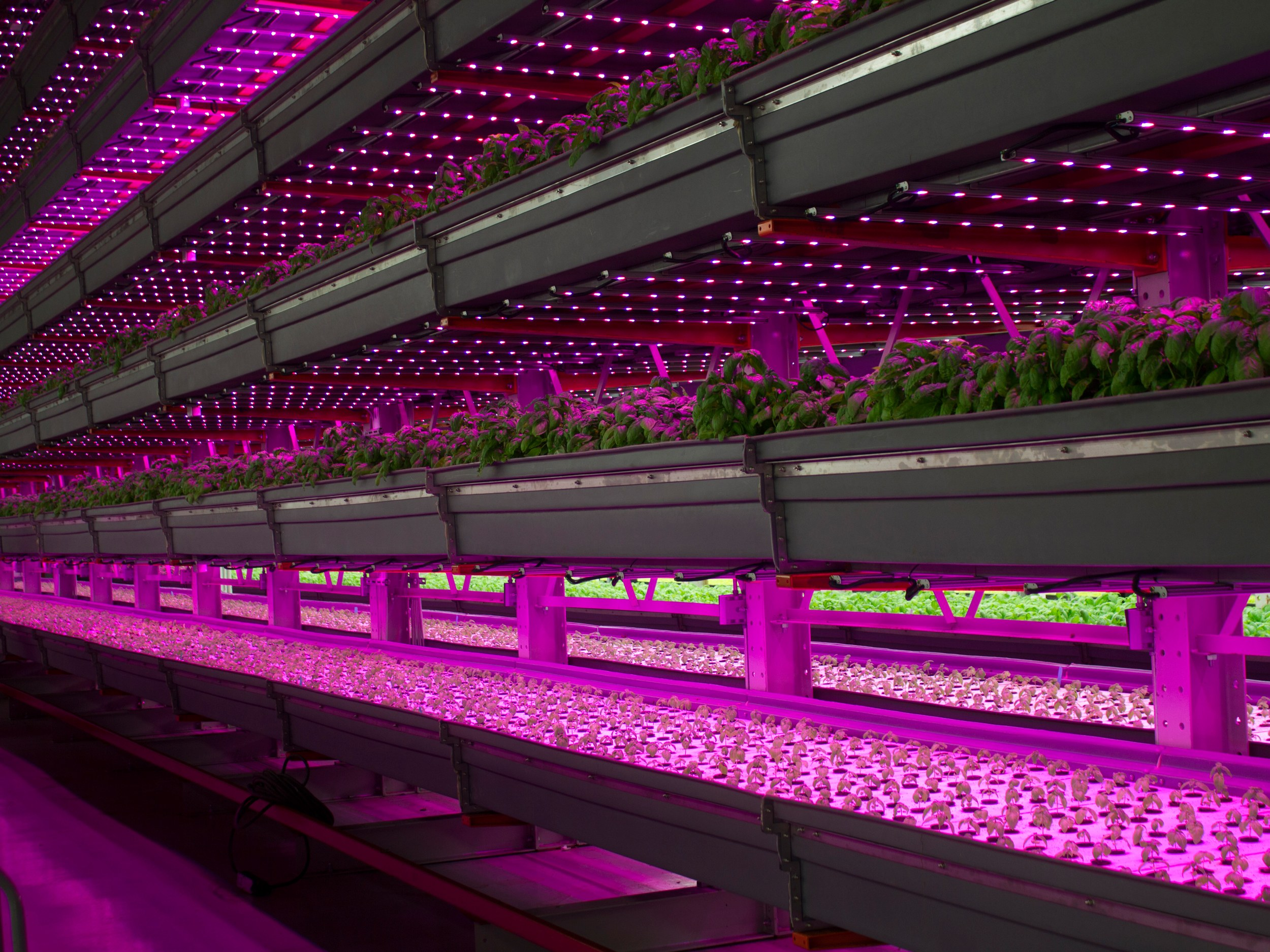 Illumitex grow lights in a vertical farm. The company is developing high-resolution imaging technology that will integrate with sensors and their lights to give a fuller picture of the growing environment.