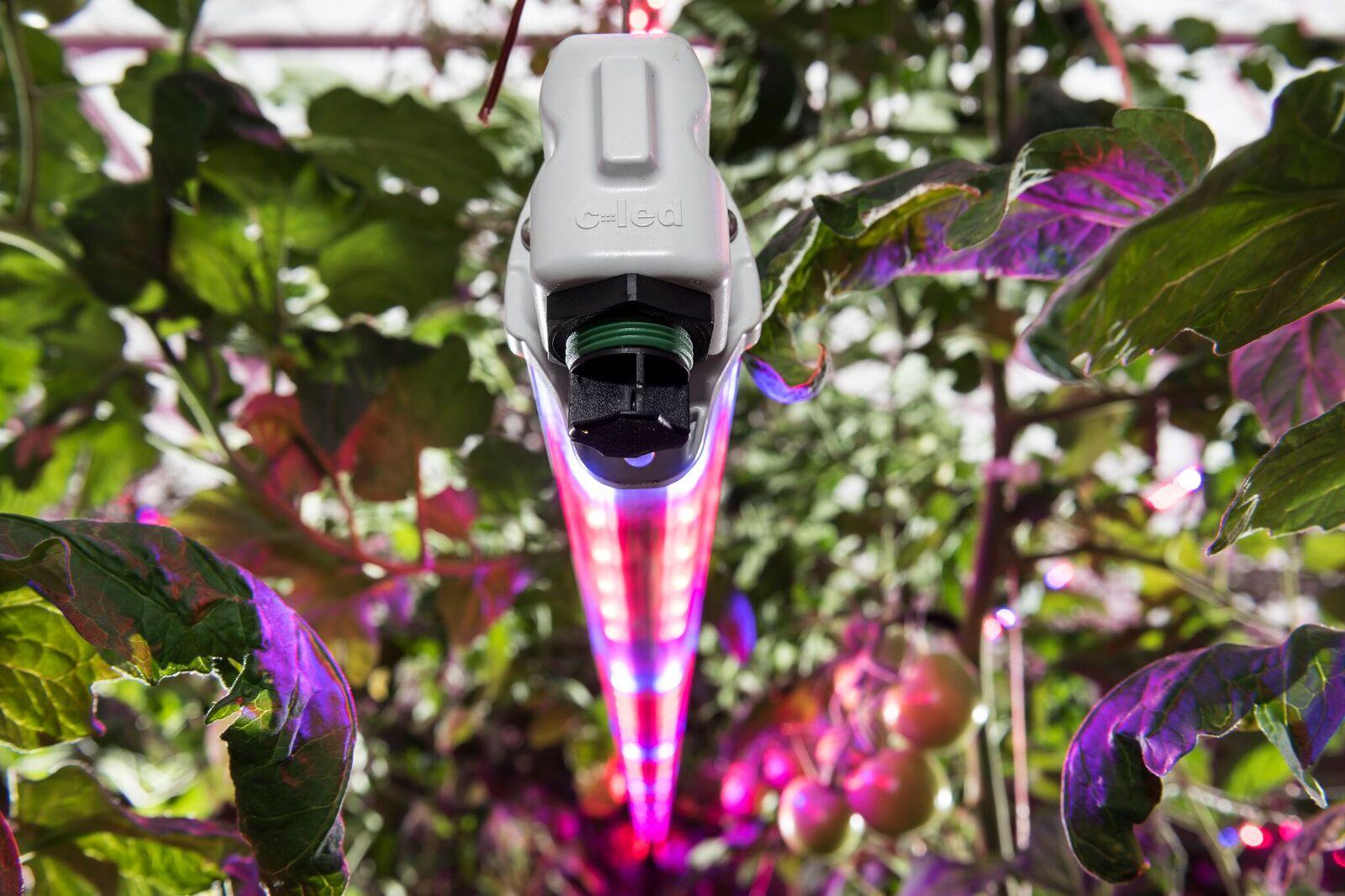 C-LED serra pomodori FriEl4.jpeg