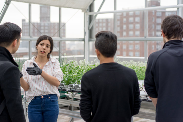 Urban agriculture consultant, Yara Nagi, explains the intricacies of hydroponic rooftop farming.
