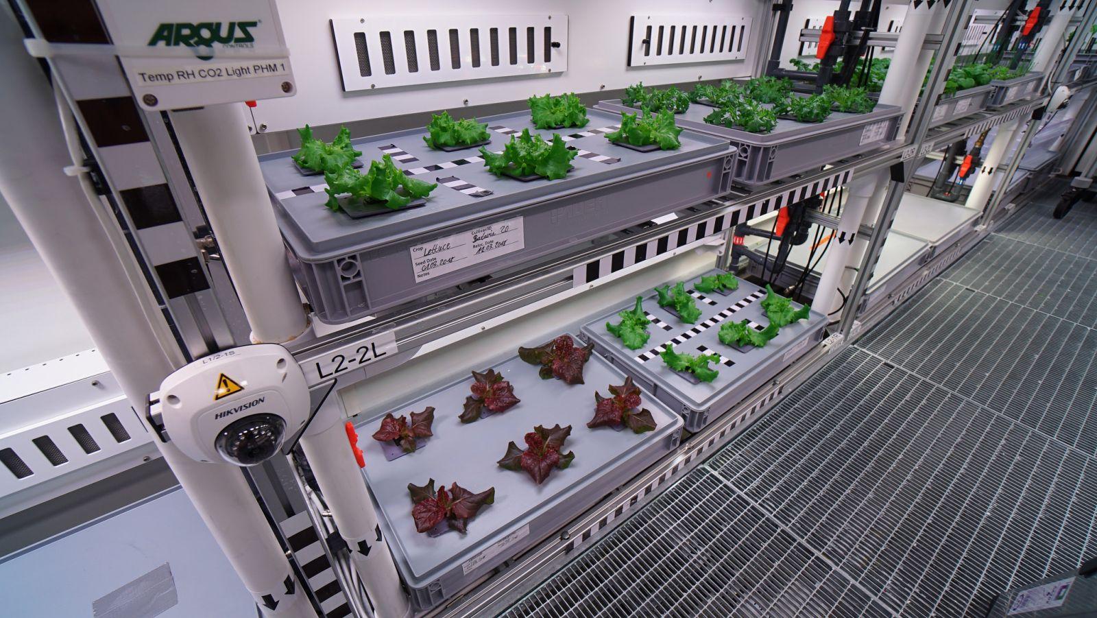 Antartica farming7.jpg
