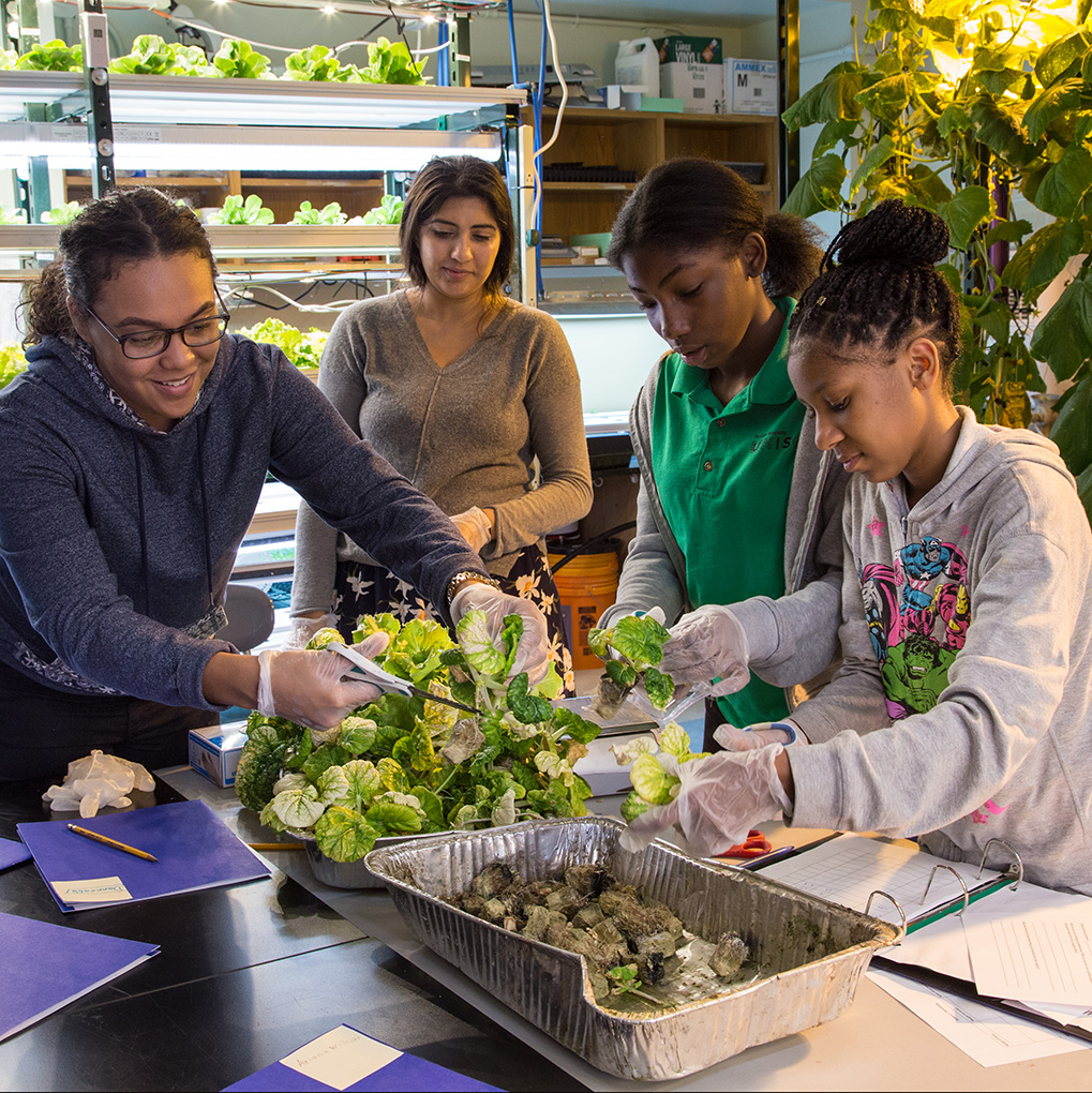 Students at work in their hydroponic farm. (Teens for Food Justice)
