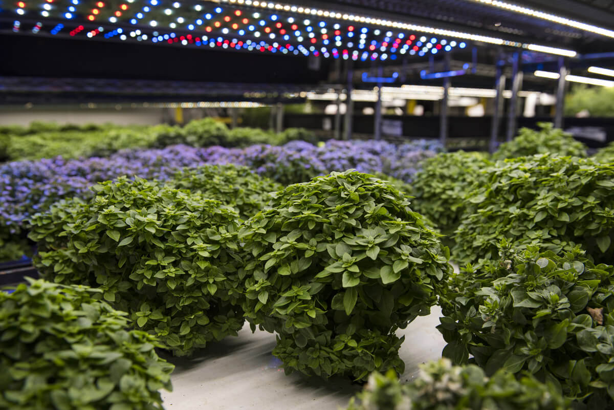farmone nyc vertical farm agritecture2.jpg