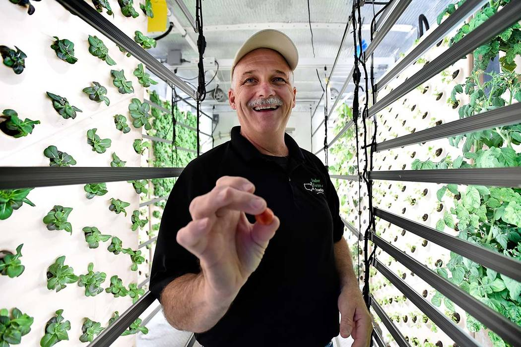 David Martin, CEO of Indoor Farms of America offers a freshly picked cherry tomato from a plant grown on a vertical aeroponic panel at his warehouse.