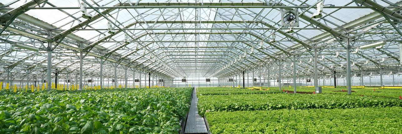gotham greens greenhouse.jpg.jpeg