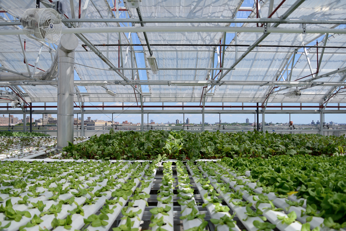 Sky Vegetables' rooftop hydroponic farming operation in New York City. (Photo courtesy of Agritecture.)