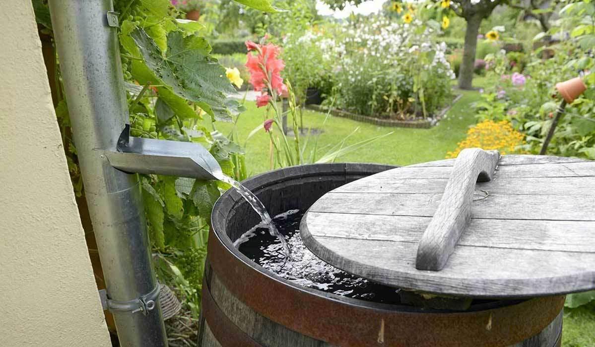 garden rain barrel.jpg