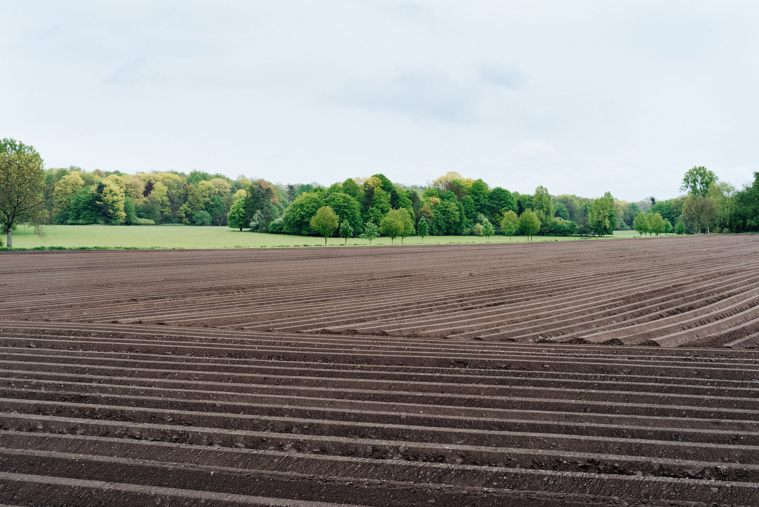 Alex agriculture (2).jpg