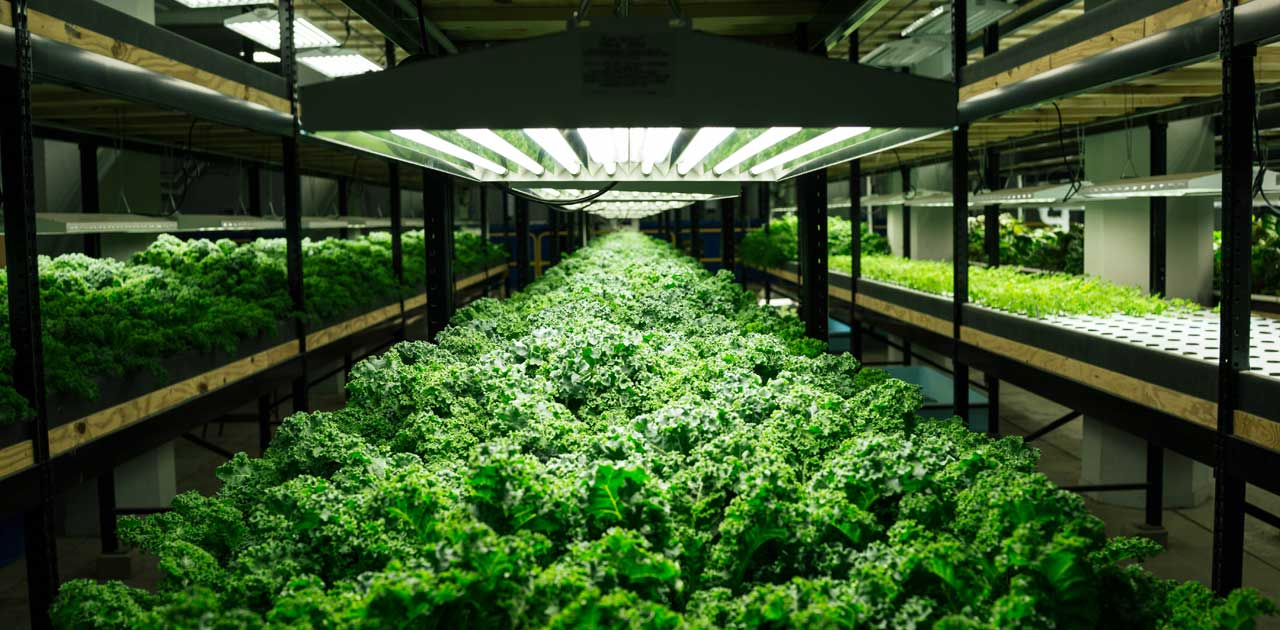 urban farming future of agriculture.jpg