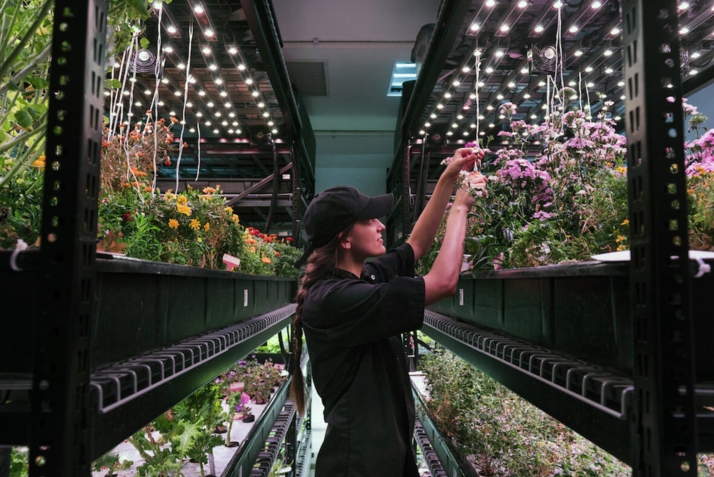 Can High Tech Indoor Agriculture Transform Local Food.jpg