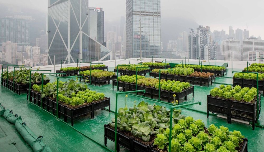 The Future, With Urban Farming — AGRITECTURE