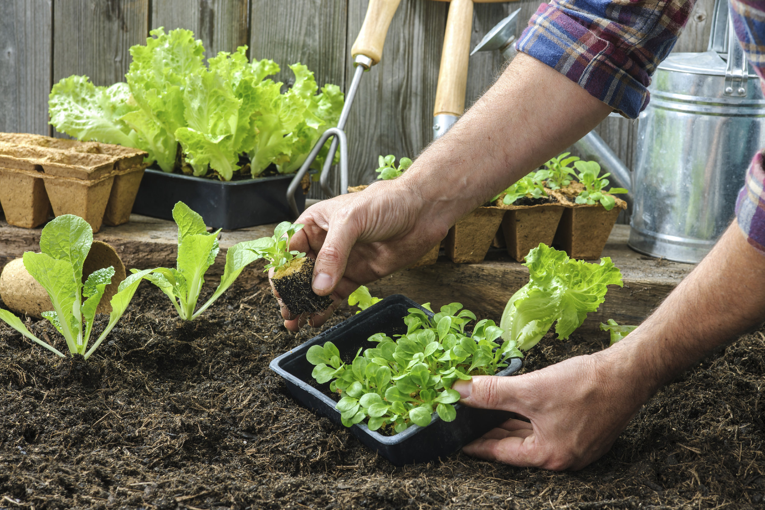 home garden agriculture.jpg