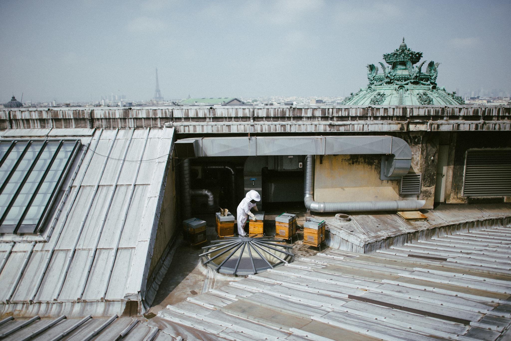 The hives on the roof of the Opera Garnier. (All Photos: Dmitry Kostyukov for The New York Times)