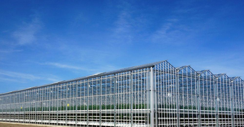 glass greenhouse.jpg