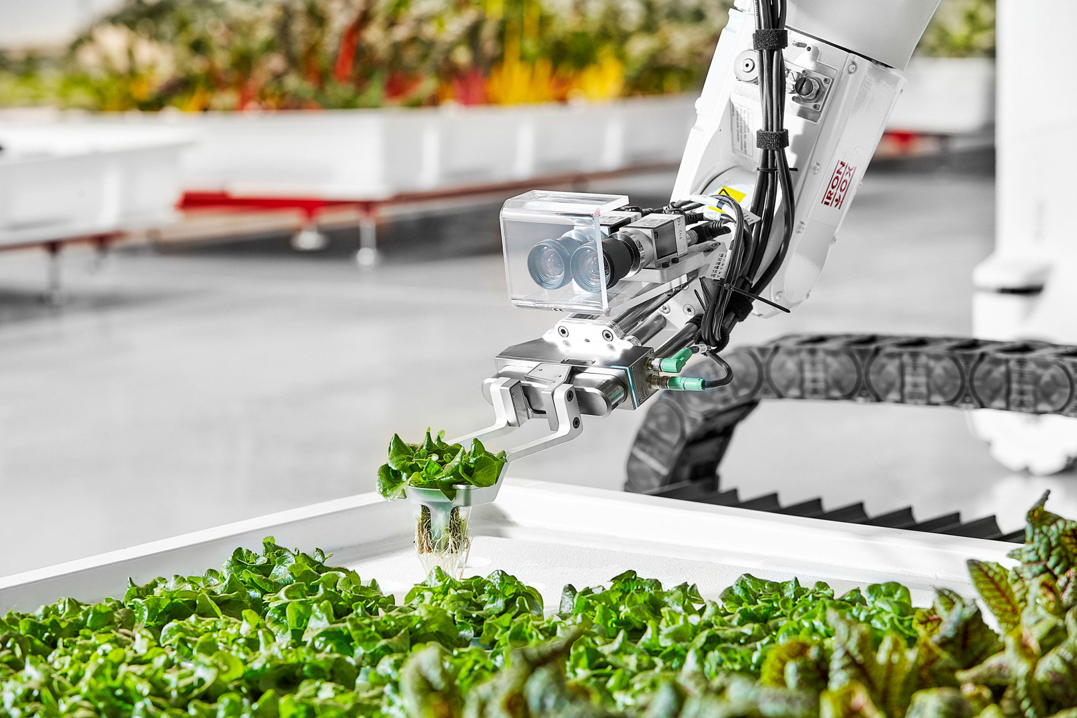 An Iron Ox robotic arm picking up and transferring lettuce to a new plant site. (COURTESY: IRON OX)