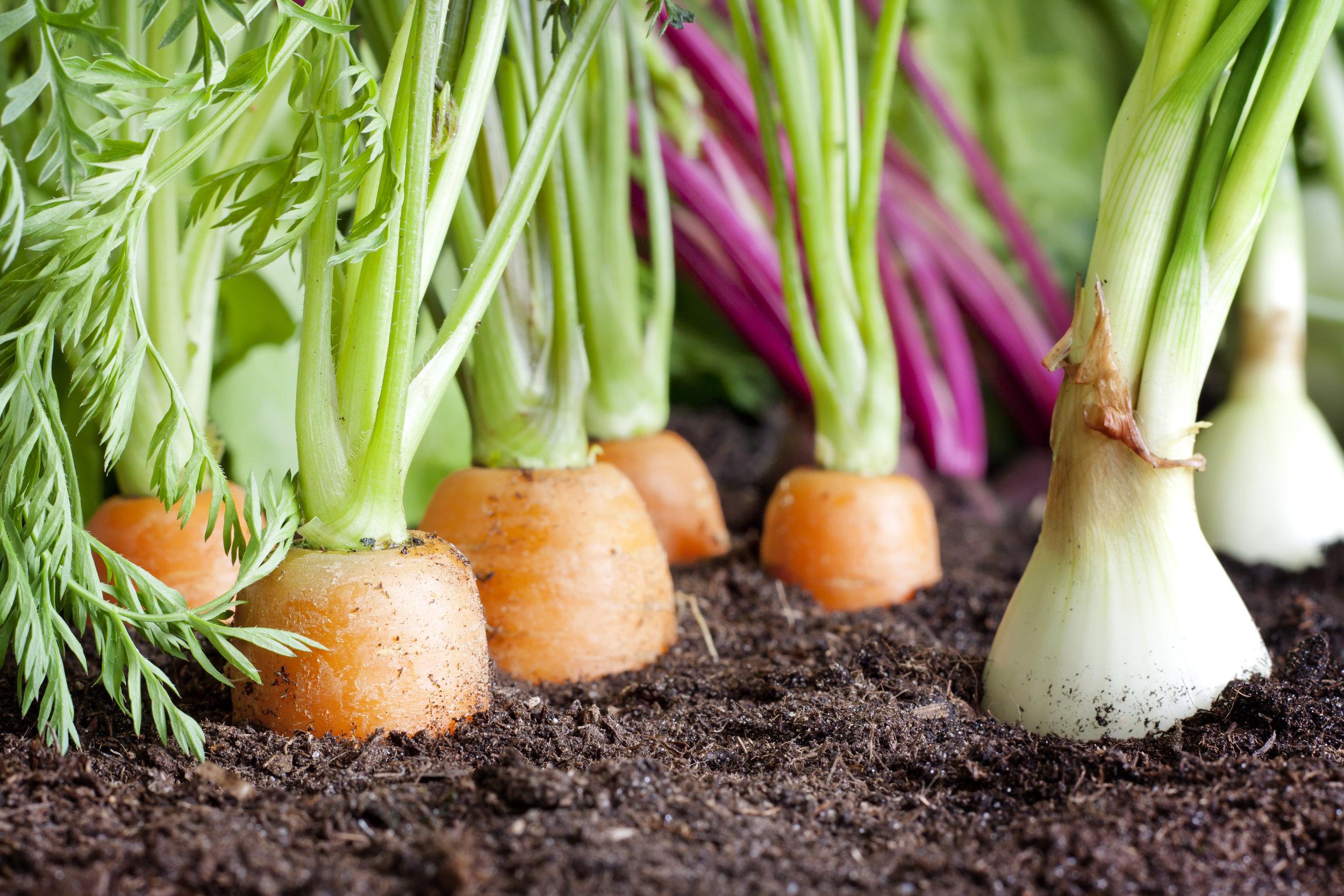 urban farming spirituality plants.jpg
