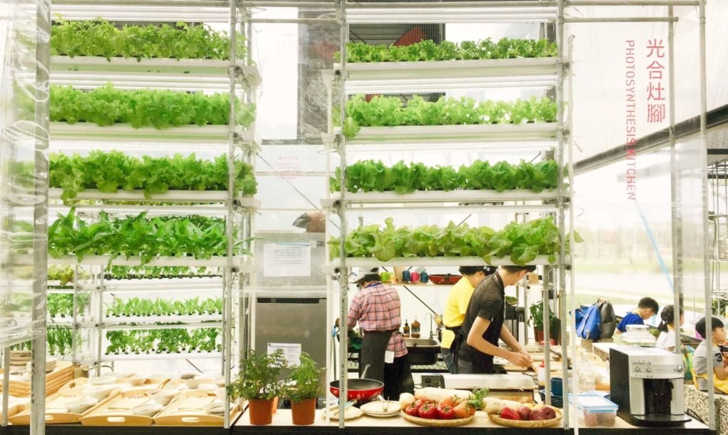 A vertical hydroponic farm is located in the Photosynthesis Kitchen, the middle zone where fresh vegetables are picked daily and cooked in the demonstration kitchen.