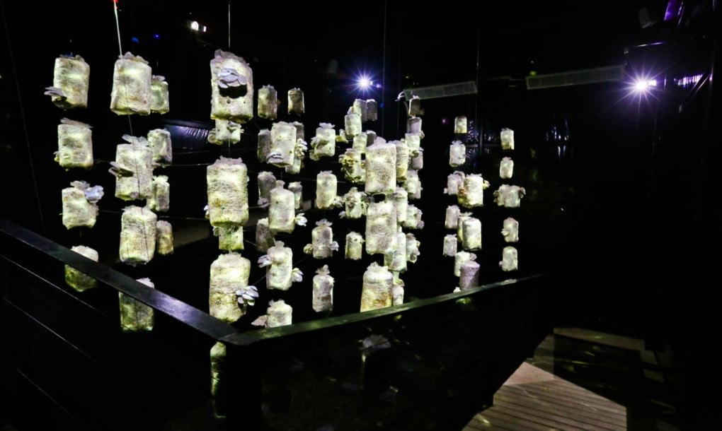 The fifth and final zone, the Theater of Mushroom, immerses visitors into a dark, highly humid environment with the coolest temperatures in the entire installation; the multisensory space is complemented by light and sound performances.