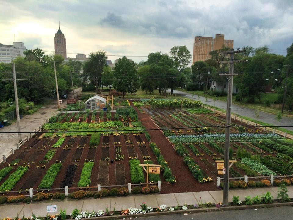 The Michigan Urban Farming Initiative's (MUFI) two-acre farm in Detroit's North End.