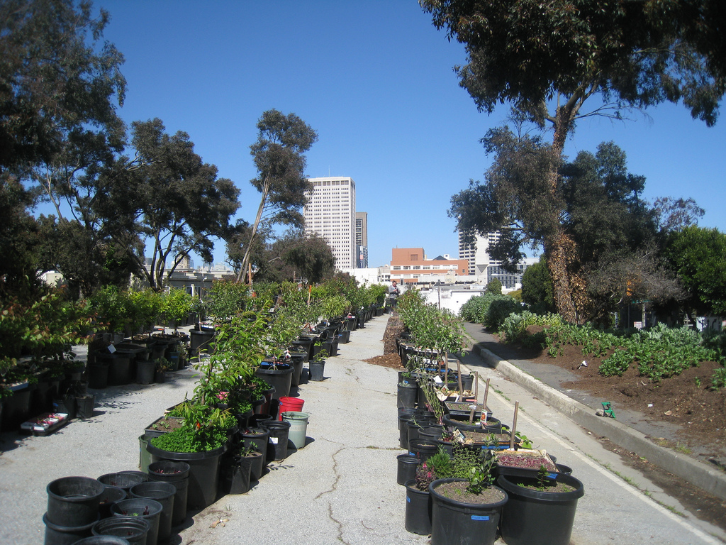 Projects like  Hayes Valley Farm , an urban agriculture education and research project located on San Francisco city-owned lots, are popping up all over America. (Photo: EdibleOffice)
