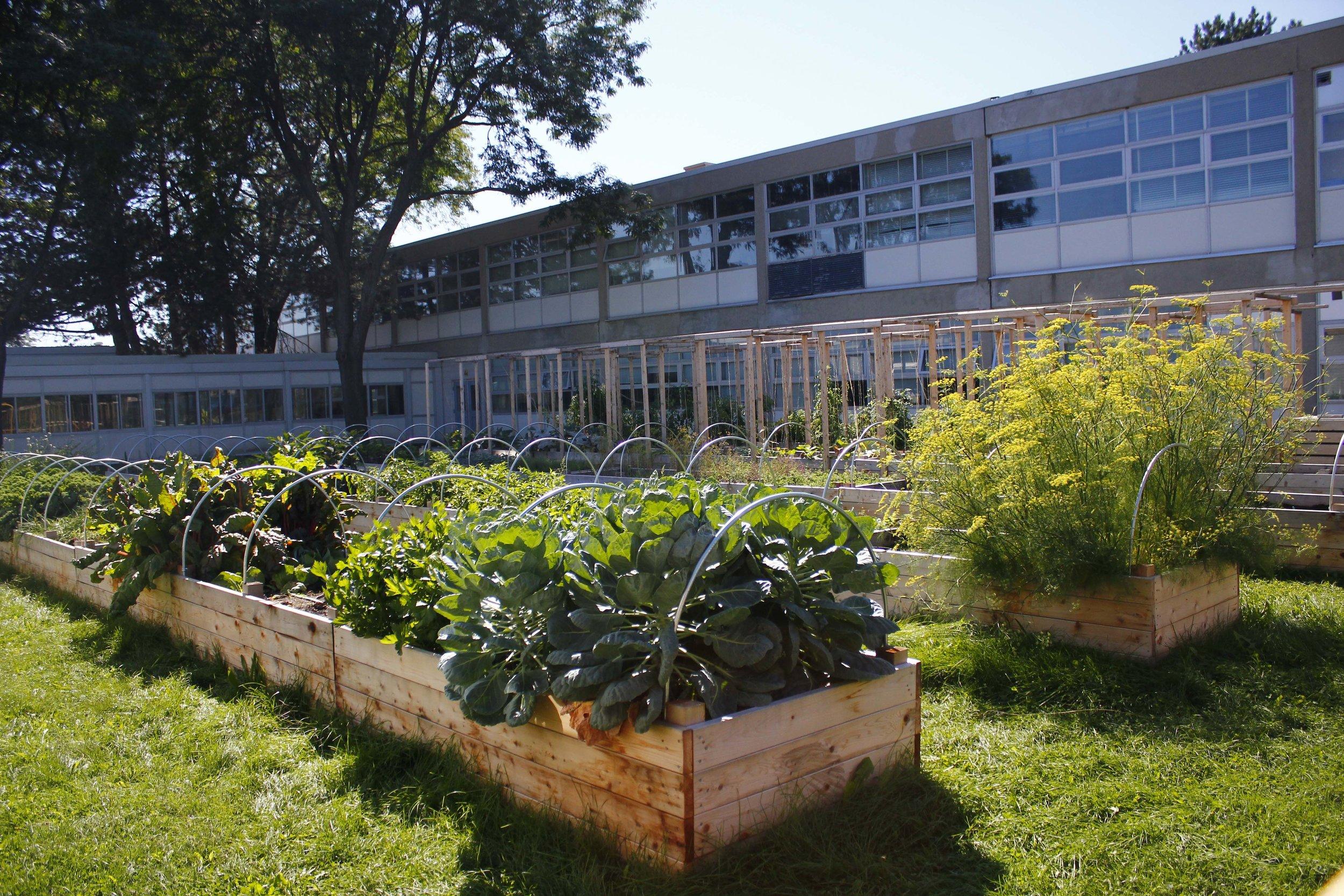 dan kunanec toronto urban farm school 2.JPG