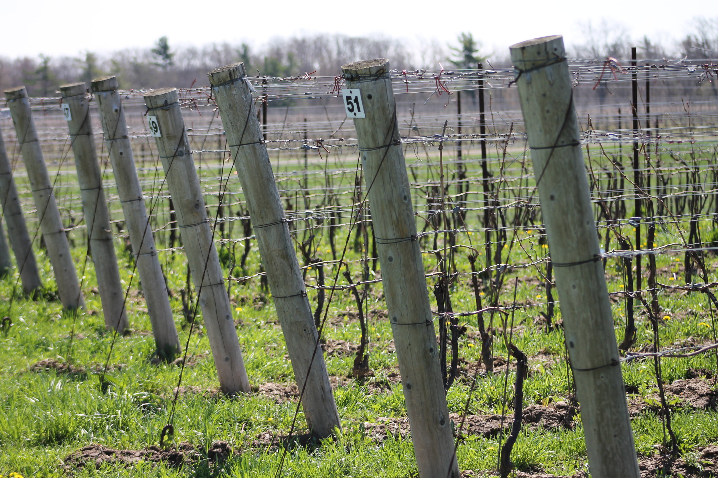 viticulture 3.JPG