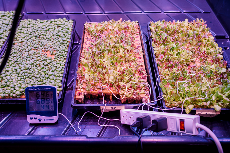Planted's test plants being grown for local restaurants, institutions, and meal-kit companies like Hello Fresh and Blue Apron
