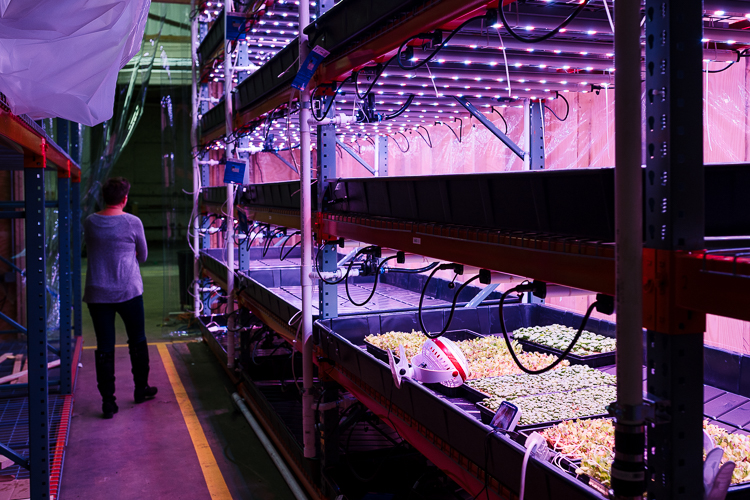 Inside Planted's 6,000-square-foot production space