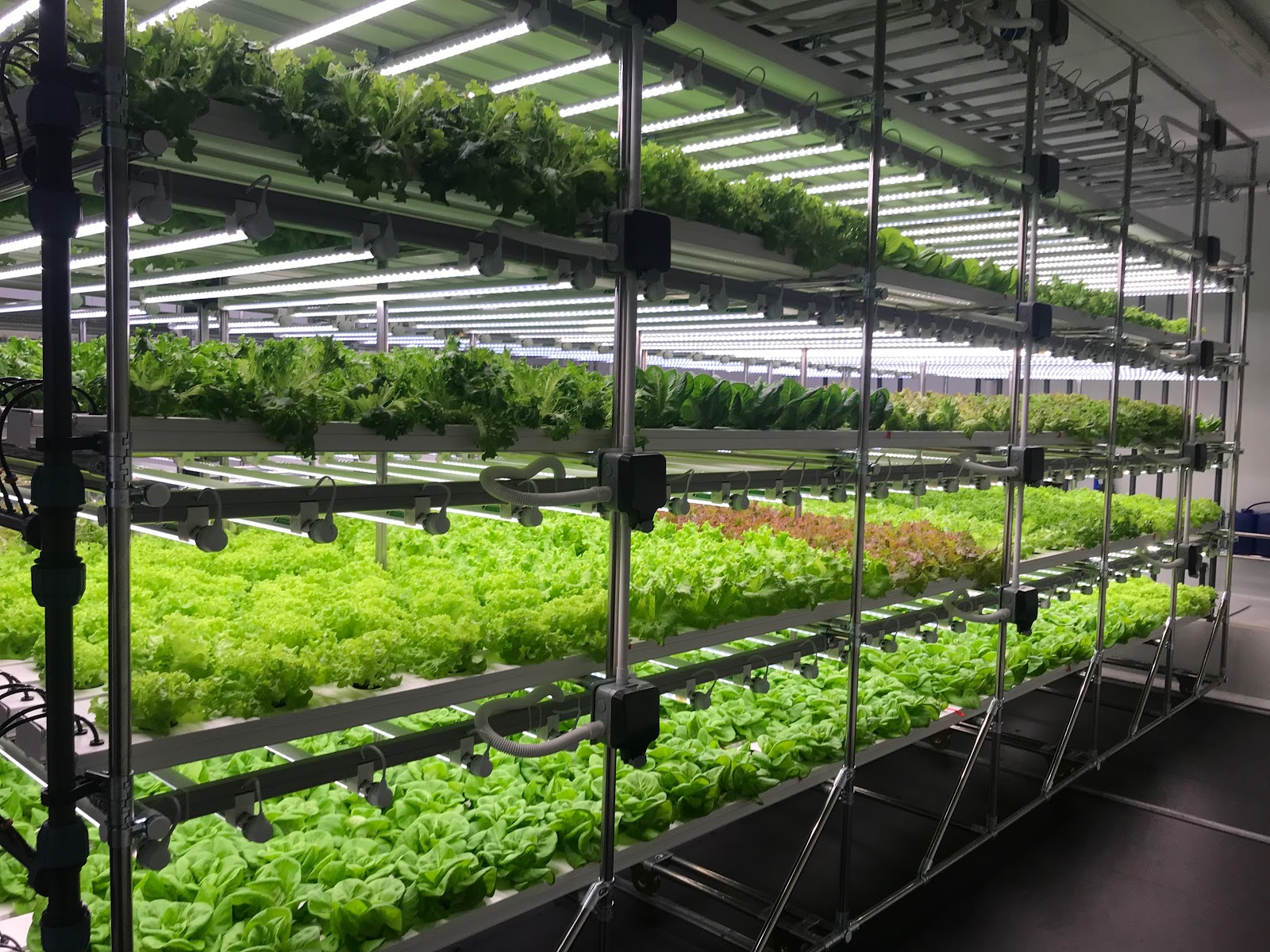 V-Farm , created by HydroGarden in the UK, is a modular vertical farming concept developed to fit within a room's available space.