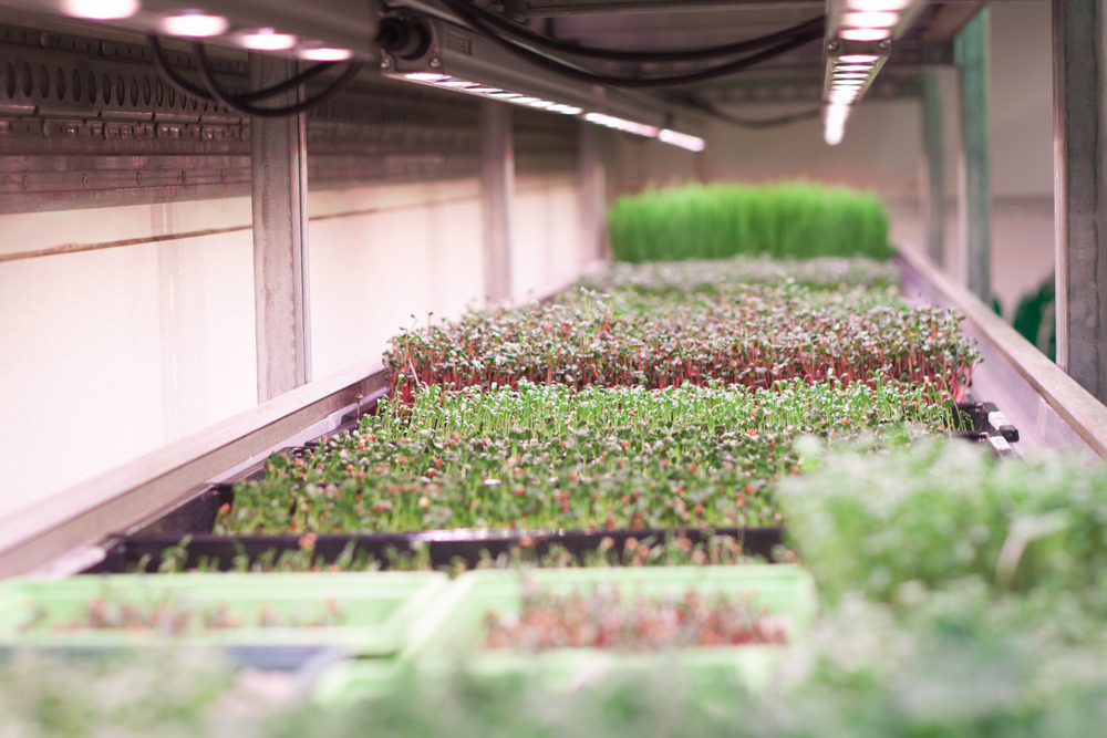 Grow Bristol  vertical farm in the UK.