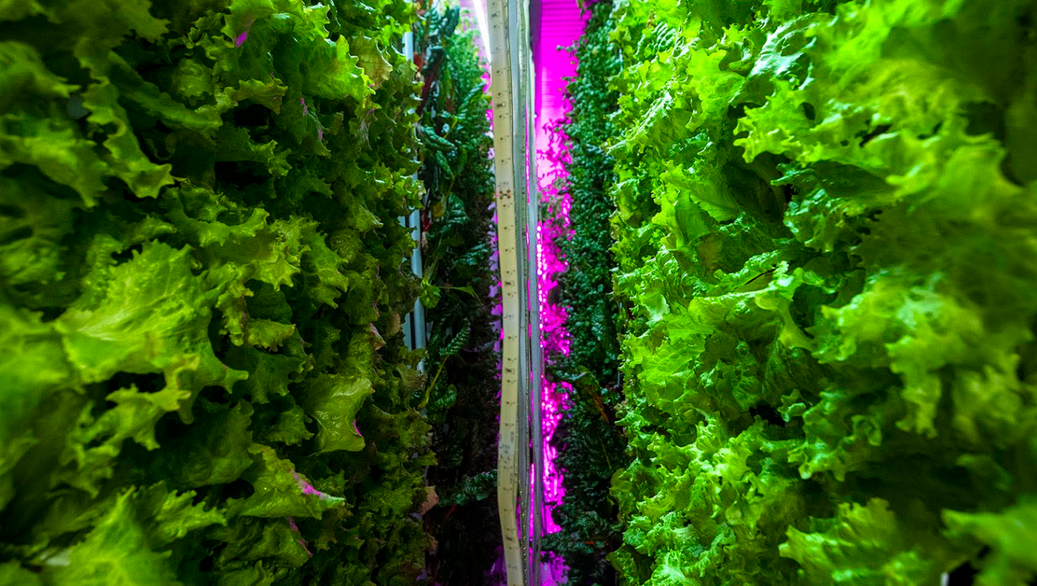 vertical farming future food.png