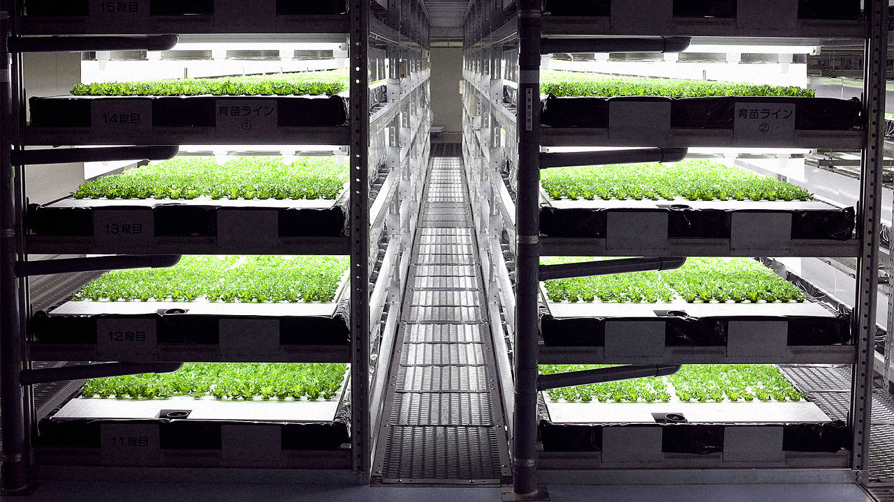 3050750-poster-p-1-this-indoor-farm-run-by-robots-can-grow-10-million-heads-of-lettuce-a-year.jpg