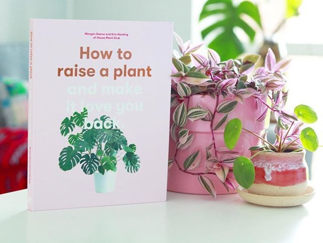 how to raise a plant.jpg