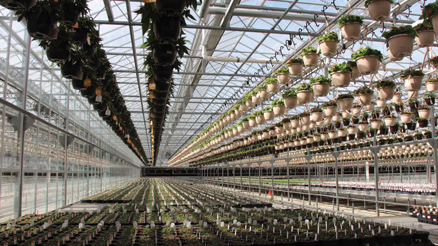 Youngs-Greenhouse-Space-Growing-Feature.jpg