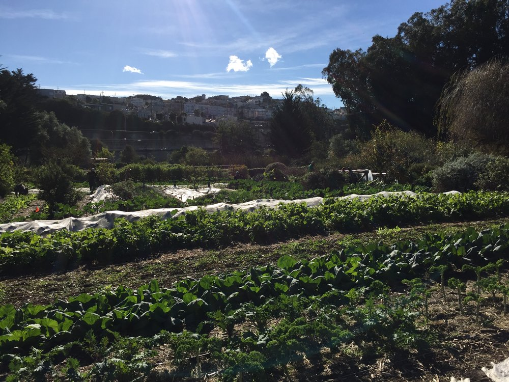 Alemany Farm A 3 5 Acre Urban Agriculture Oasis In San Francisco Agritecture