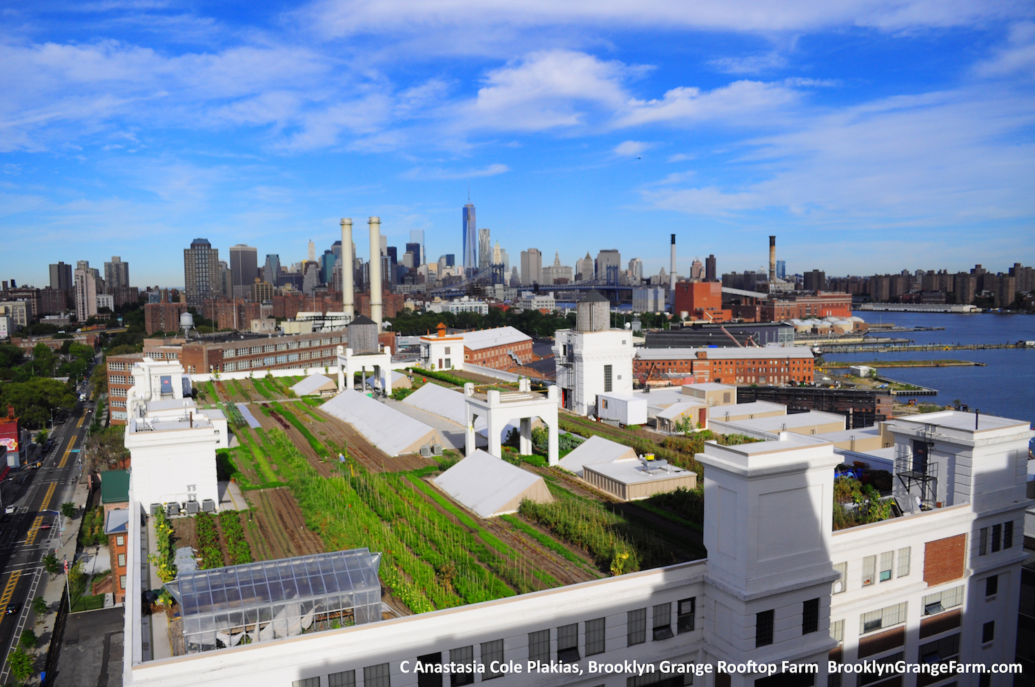 One of  Brooklyn Grange 's rooftop farms in Brooklyn (not used in this study).