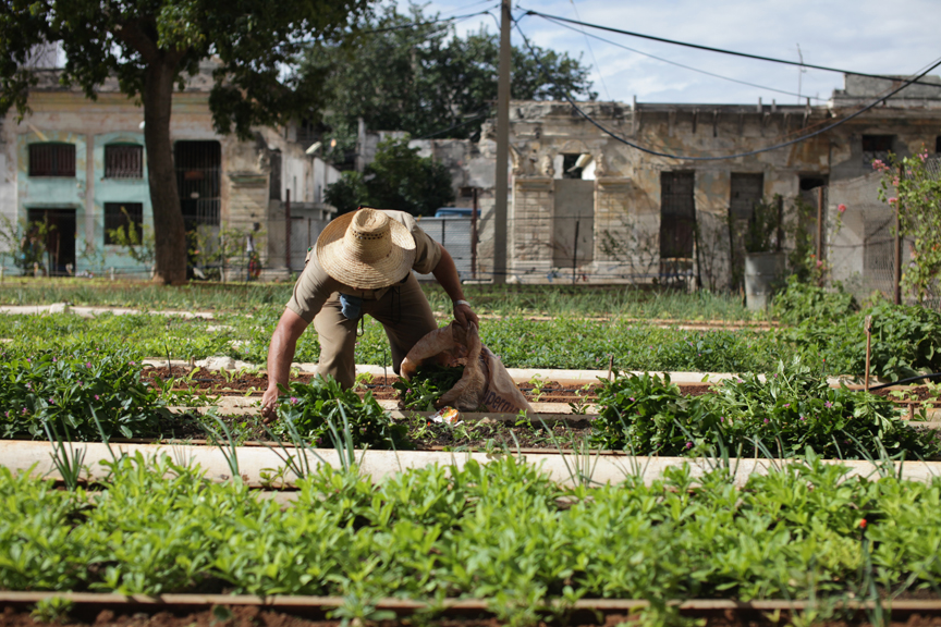 An organic urban farm in Cuba.