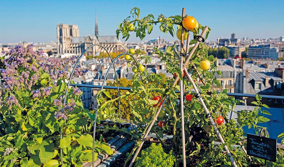urban farming paris.jpg