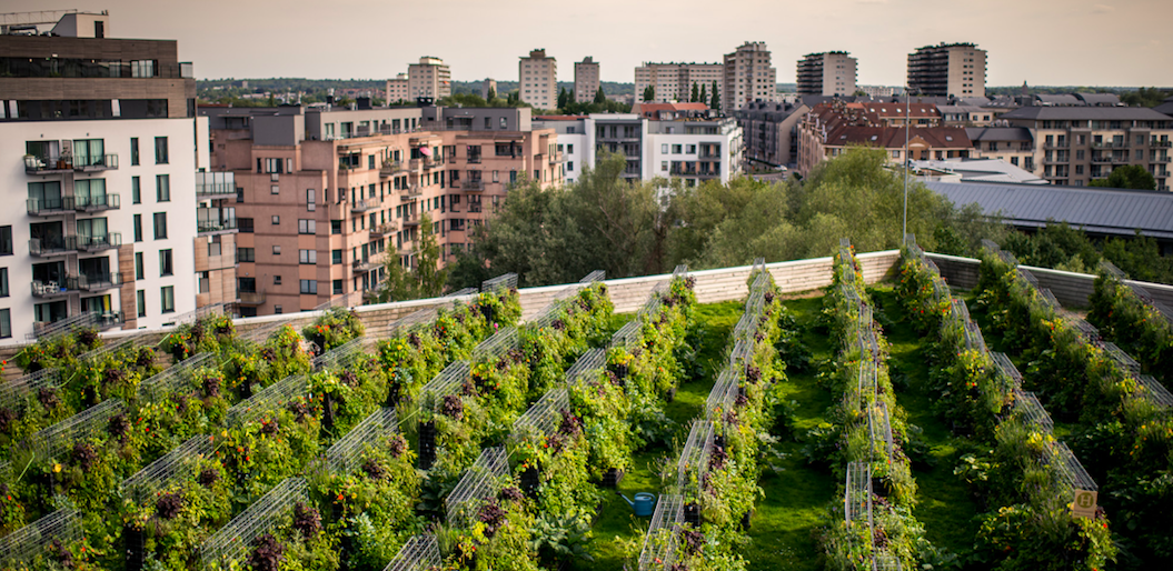 A rooftop farm in the heart of Paris by AFAUP member and season 2 Parisculteurs participants  Peas&Love .